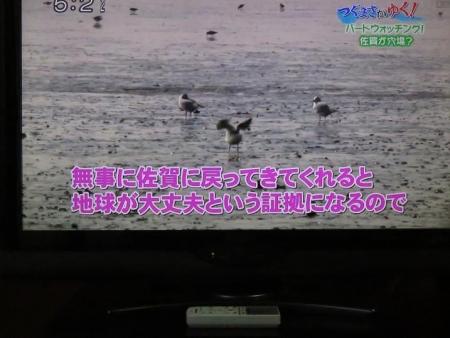 STSサガテレビ鳥 104