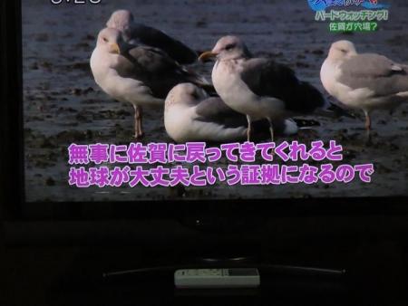 STSサガテレビ鳥 105