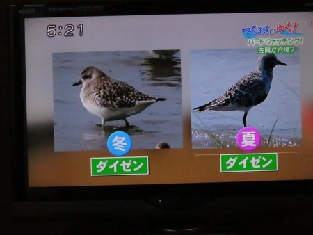 STSサガテレビ鳥 087