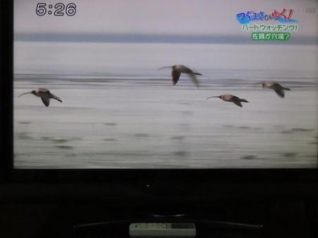 STSサガテレビ鳥 134