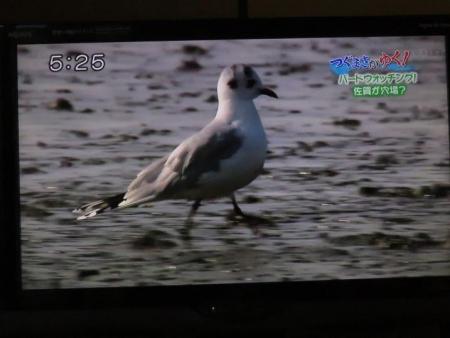 STSサガテレビ鳥 131