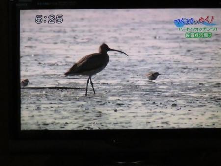 STSサガテレビ鳥 128