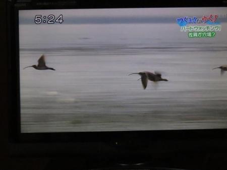 STSサガテレビ鳥 121