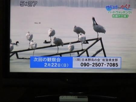 STSサガテレビ鳥 143