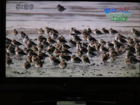 STSサガテレビ鳥 138