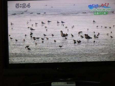 STSサガテレビ鳥 123