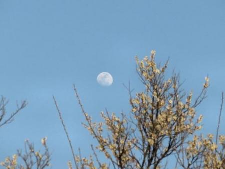 月と夕陽 033