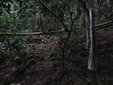 ホソバナコバイモ 142