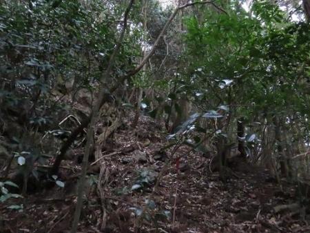 ホソバナコバイモ 153