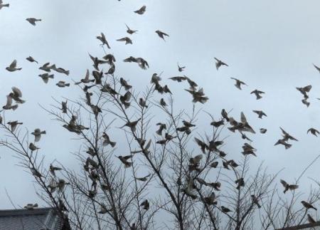雀とメジロ 070