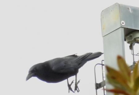 運動公園のスズメ 151