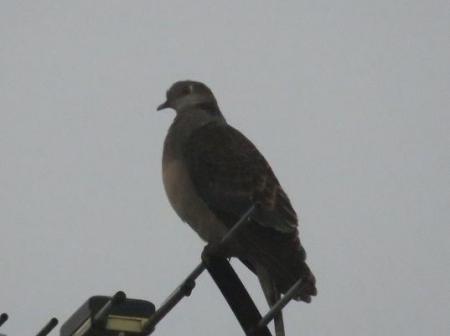 鳩春雨と 006