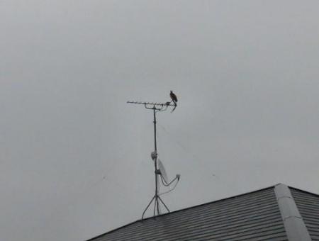 鳩春雨と 015