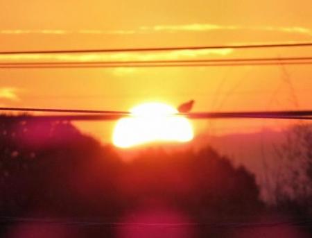 今朝の太陽 017