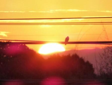 今朝の太陽 014