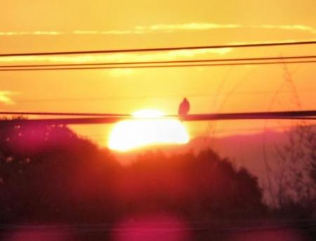 今朝の太陽 016