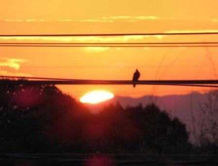 今朝の太陽 010