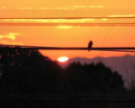 今朝の太陽 007