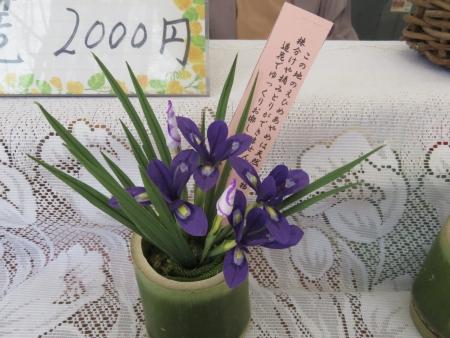 エヒメアヤメ 051