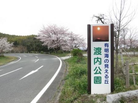 黒木の桜 060