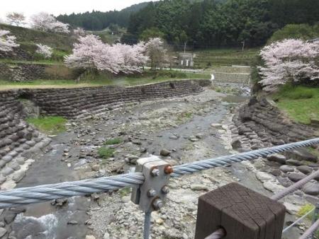 黒木の桜 190
