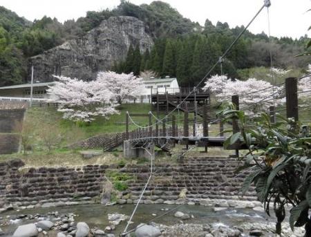 黒木の桜 183