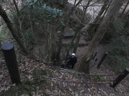 黒木の桜 306