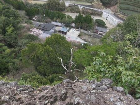黒木の桜 288