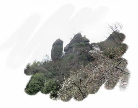 黒木の桜 330