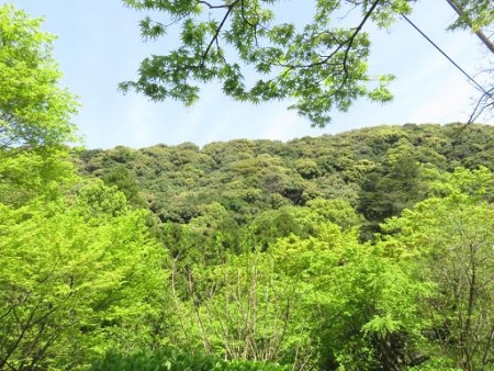 清水山とイトトンボ 227