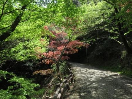 清水山とイトトンボ 218
