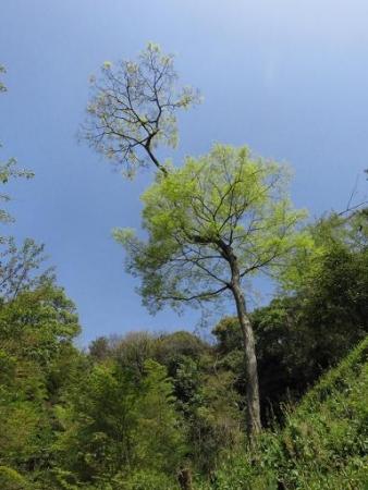 清水山とイトトンボ 204