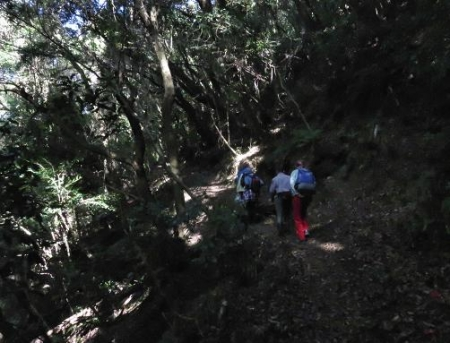 清水山とイトトンボ 072