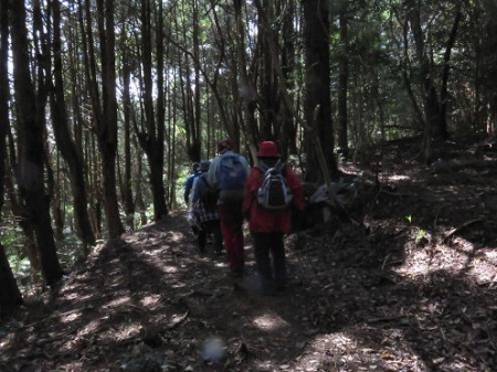 清水山とイトトンボ 128