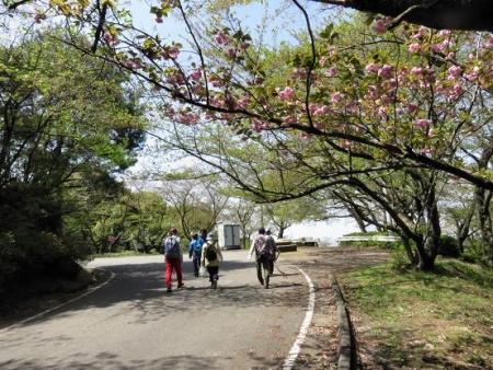 清水山とイトトンボ 142