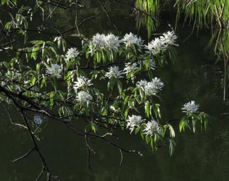 カラ迫岳と麻生池 367