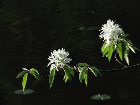 カラ迫岳と麻生池 381