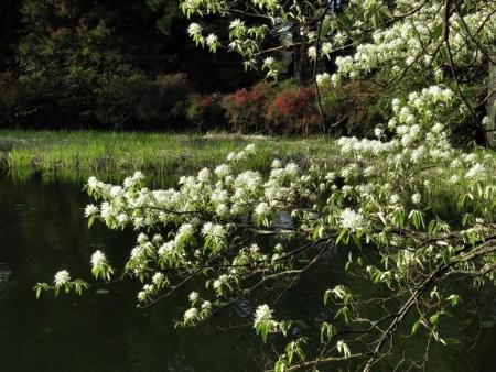 カラ迫岳と麻生池 378