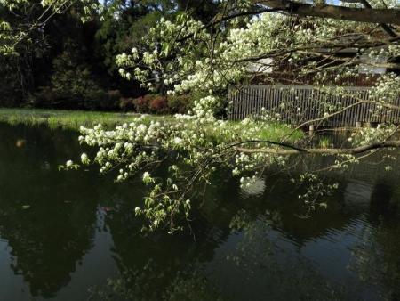 カラ迫岳と麻生池 377