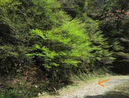 カラ迫岳と麻生池 151
