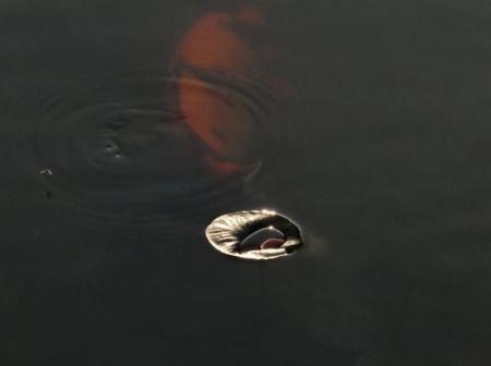 カラ迫岳と麻生池 411