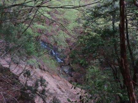 カラ迫岳山開き 白いリンドウ 211