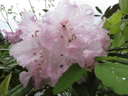 カラ迫岳山開き 白いリンドウ 066
