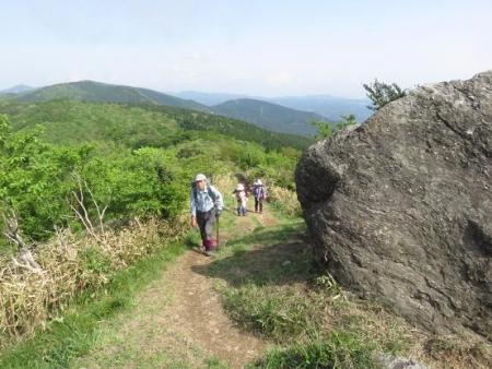 井原山ツツジ 266
