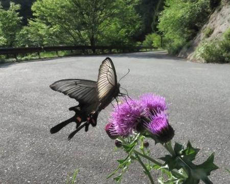 蝶の舞矢部の花と山開き 288