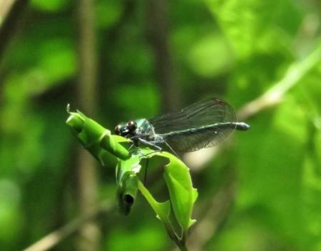 蝶の舞矢部の花と山開き 178
