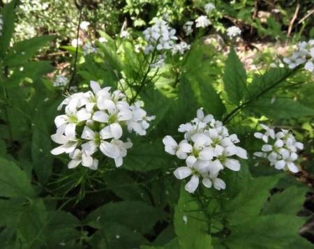 蝶の舞矢部の花と山開き 173