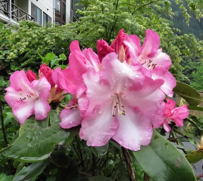 蝶の舞矢部の花と山開き 343
