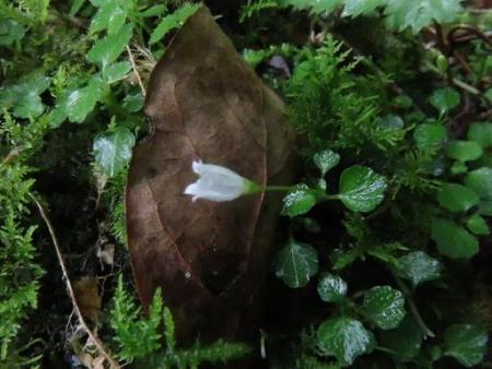 蝶の舞矢部の花と山開き 358