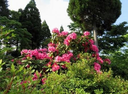 蝶の舞矢部の花と山開き 474